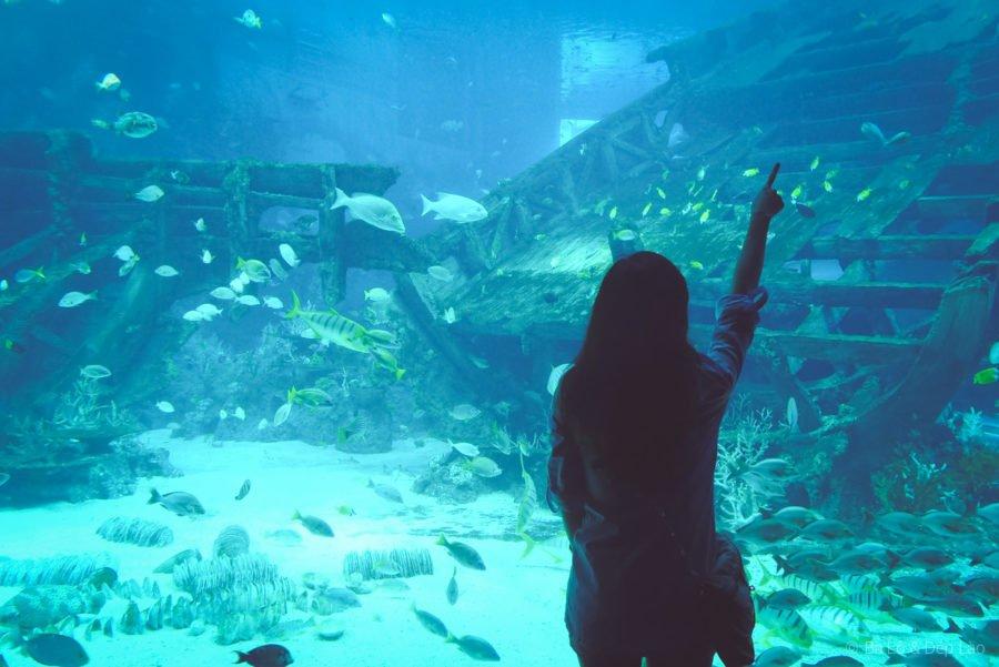 Con nít xem cá