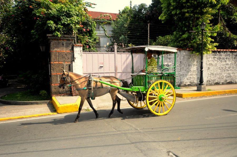 Xe ngựa ở Intramurous rất nhiều nhưng không nên đi nha các bạn