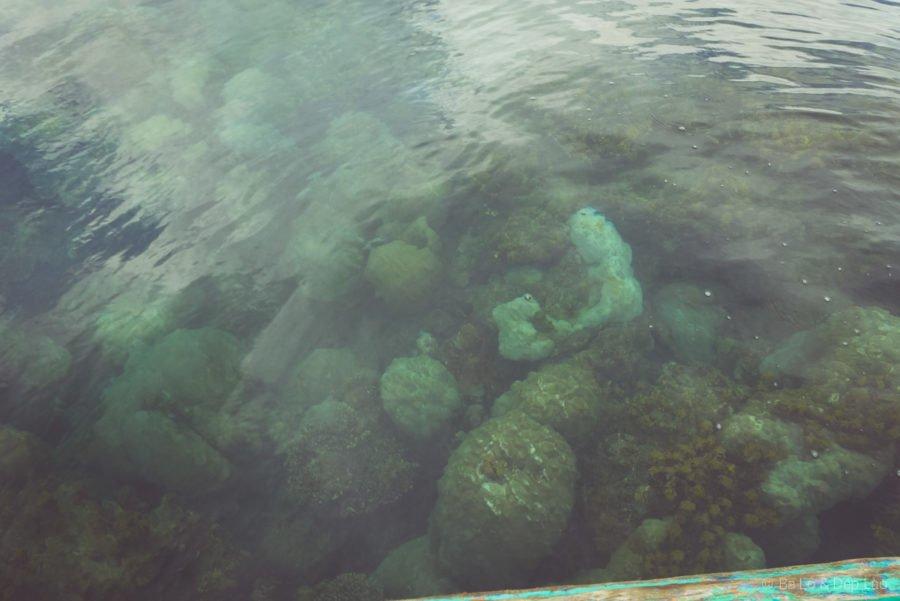 San hô tại Mũi Gành Dầu