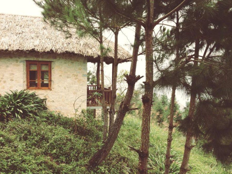 Ecolodge của bọn mình xinh đẹp giữa rừng thông