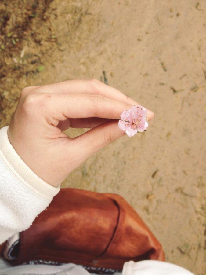 Nhiều loài hoa rừng mọc ven đường